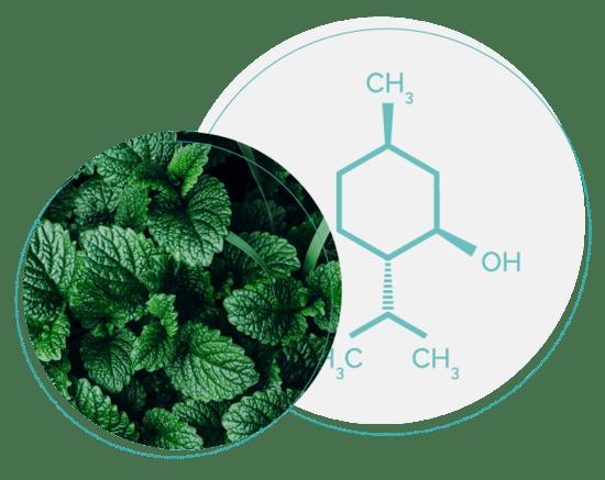 gentle menthol formula